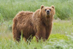 bear aware training cdda